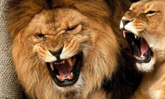 Найсильніші щелепи тваринного світу