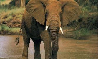 Найсильніші тварини в світі: хто вони?