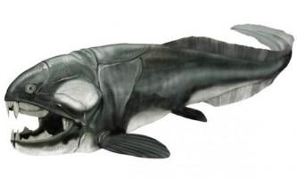 Найдивніші доісторичні тварини