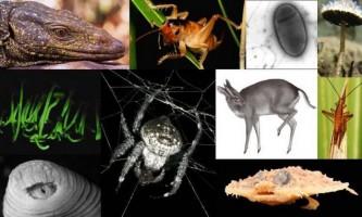 Найдивніші істоти