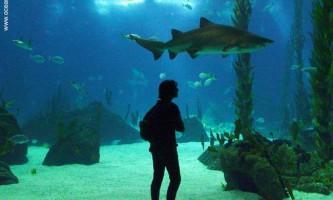 Найбільш вражаючі океанаріуми і аквагалереі світу
