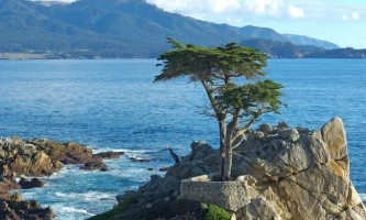 Найзнаменитіші дерева в світі
