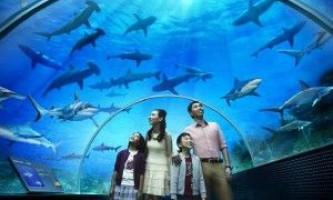 Найбільший океанаріум в світі