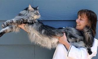 Найдовший у світі кіт породи мейн-кун помер в сша