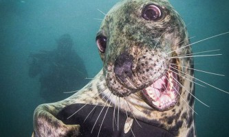 Найбільш дружелюбний в світі тюлень