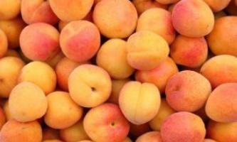 Самий кращі сорти абрикосів