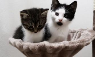 Найкращий корм для кошенят: як вибрати