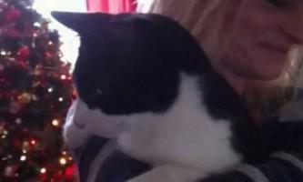 Найгучнішою мурликальщіком став кіт по кличці мерлін