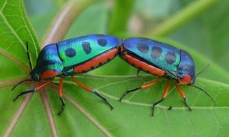 Найбільш живучими тваринами в історії нашої планети виявилися жуки