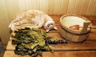 Сауна для кішок і собак