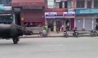 Втік носоріг напав на перехожих в непалі