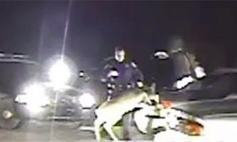Збитий олень ожив в багажнику, налякавши поліцейських