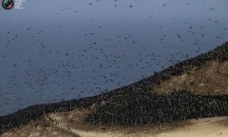 Збір пташиного посліду (гуано) в перу
