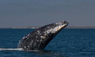 Сьогодні всесвітній день китів і дельфінів