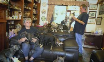 Сімейна пара містить будинку 41 собаку
