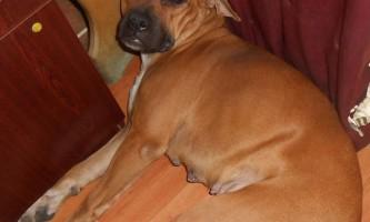 Сімейство собак з україни рятує кішок