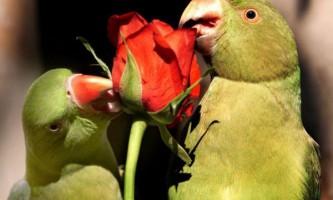 Сенегальські папуги більше довіряють відчуттів, ніж зору