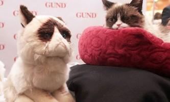 Сердита кішка зустрілася з прихильниками в нью-йорку
