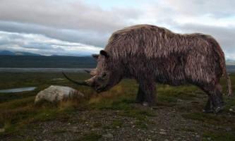 Шерстистий носоріг - вимерла тварина