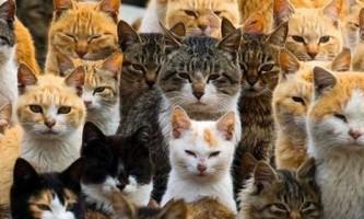 Шість кішок на людину: острів аошіма