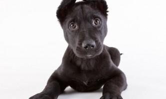 Цуценята з притулку (shelter puppies) майкла клотен