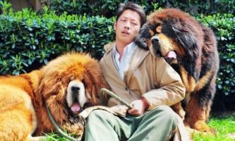 Щеня тибетського мастифа проданий в китаї за 12 мільйонів юанів