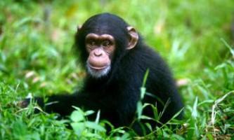 Значні відмінності людини від шимпанзе розкриті в сміттєвому днк