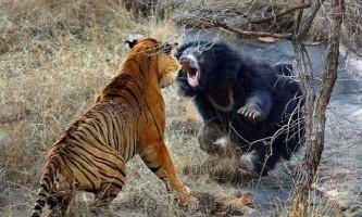 Шокуючі кадри з життя диких тварин