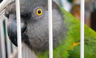Шотландець потрапив до в`язниці за напад на папугу