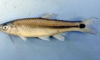 Шуми в воді змушують рибу підвищувати голос, щоб перекричати
