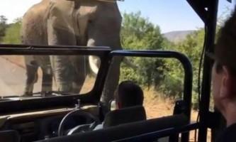 Шварценеггер зняв на відео свою втечу від слона