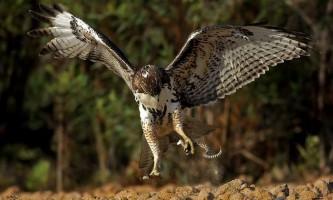 Сутичка птиці і змії: кігті проти отрути