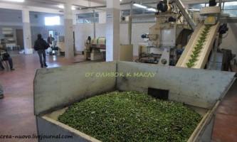 Сицилія: від збору оливок до віджиму оливкового масла