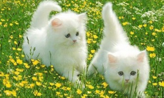 Симптоми глистів у кішок і ознаки наявності глистів у кішки