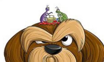 Симптоми, профілактика і лікування кліщів у собак. Що робити якщо собаку вкусив кліщ і як витягнути його?