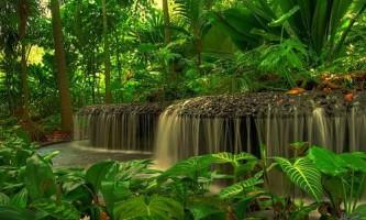 Сінгапурський ботанічний сад