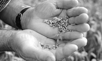 Ситуація з зерновими може повторити продовольчий криза 2008 року