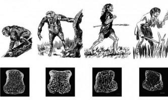 Скелет людини став більш крихким і полегшав