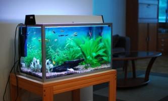 Скільки і як відстоювати воду для акваріума?