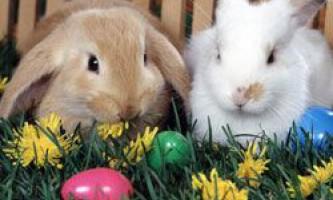 Скільки років можуть прожити кролики в домашніх умовах?