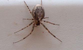 Скільки ніг потрібно павуку?