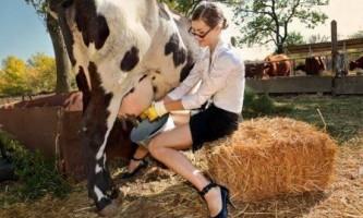 Скільки разів доїти корову