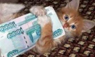 Скільки коштує кошеня
