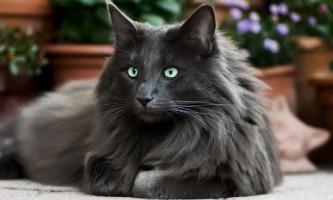 Скільки живуть кішки?