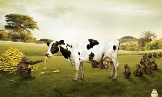 Худоба випускає більше метану, ніж нафтова і газова промисловості разом узяті