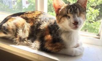 Сліпа кішка насолоджується життям