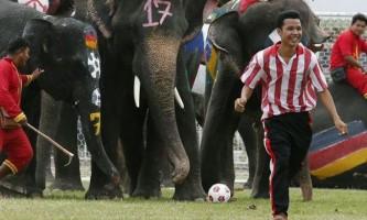 Слони: неймовірна реальність