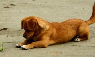 Сміливий богомол показує навички кунг-фу, борючись з собакою