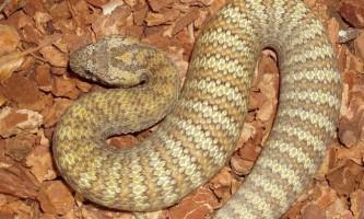 Смертельні змії