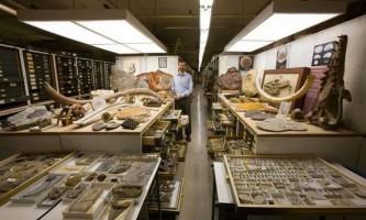 Смітсонівський національний музей природної історії